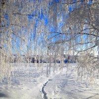 Дорога в зиму. :: оля san-alondra