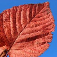 Осенний лист :: Mariya laimite