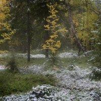 Первый снег :: Игорь Чубаров