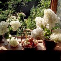Окно в сад :: Иля Григорьева