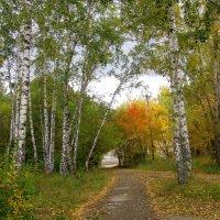 Осень . :: Мила Бовкун