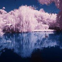 Лебединное озеро :: Alexander Varykhanov