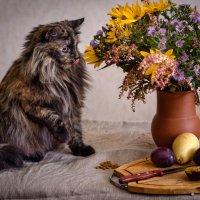 Натюрморт с кошкой :: Елена Канышева