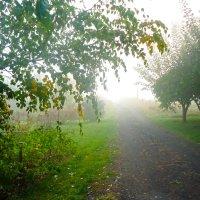 Дорога в туман :: Виктория Власова