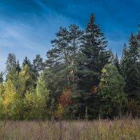 В багрец и золото одетые леса... :: Михаил (Skipper A.M.)