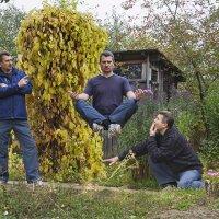 И на даче тоже осень... :: Mikhail .