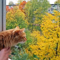 Ах, пустите меня в осень погулять... :: Елена Федотова