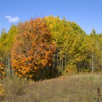 Золотая осень! :: Вячеслав Бакаев