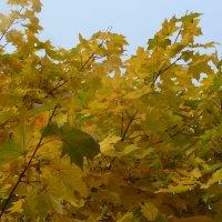 Осень :: Валюша Черкасова