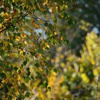 просто красиво осенью в бабье лето :: Svetlana AS