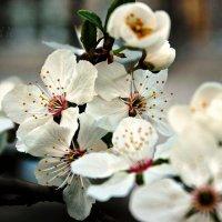 Весна. :: Анастасия Волковая