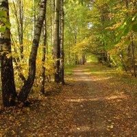 Теперь, точно, Золотая Осень IMG_1400 :: Андрей Лукьянов