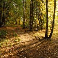 Теперь, точно, Золотая Осень IMG_1426 :: Андрей Лукьянов