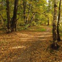 Теперь, точно, Золотая Осень IMG_1428 :: Андрей Лукьянов