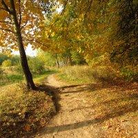 IMG_1455 - Теперь, точно, Золотая Осень :: Андрей Лукьянов