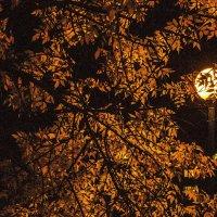 Пожелтела листва... :: juriy luskin