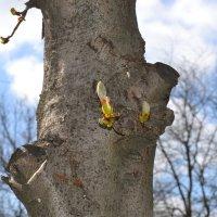 дерево :: ARM-PHO