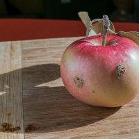Эх, яблочко! :: Яков Реймер