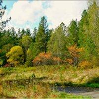 Осень в тайге :: galina tihonova