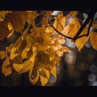 Осеннее :: Алёнка Шапран