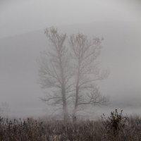 туман :: lev