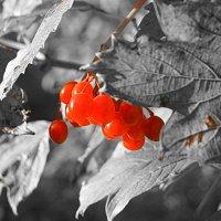 Вот и осень пришла :: Павел Гусев