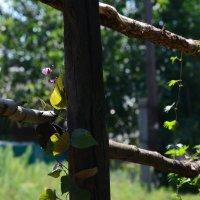 Весенний сад :: Полина Гудина