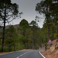 Forest road :: Valentina Severinova