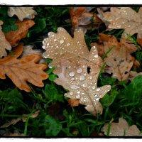 Осень, она не спросит, осень, она придёт... :: muh5257