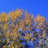когда деревья были большими :: Евгений Фролов