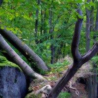 там на камнях растут деревья.. :: юрий иванов
