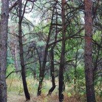 лес :: Василий Платонов