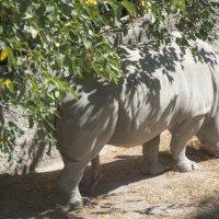 Пятиногий носорог :: Сергей Вахов