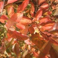 листья осени :: Наталья Александрова