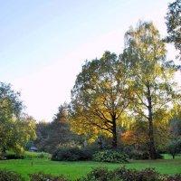 в японском саду, Москва :: Елена Познокос