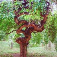 пластика дерева :: Александр Корчемный