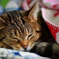 Tak kot śpi :: Janusz Wrzesień