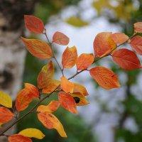 Осень :: Андрей Куприянов