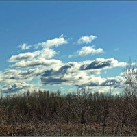 Пейзажи весны :: Любовь Чунарёва