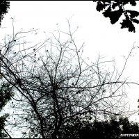 Осень.....осень... :: Allekos Rostov-on-Don
