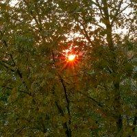 Закатное солнышко... :: Елена Васильева