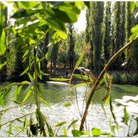 Вид на пруд сквозь завесу... :: Тамара (st.tamara)