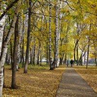 Березовая осень :: Andrad59 -----