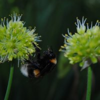 Жизнь пчёл. :: Надежда Глен