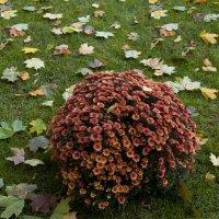 Осенняя картина :: marmorozov Морозова