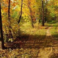 Золотая Осень в Лосином острове DSC08837 :: Андрей Лукьянов