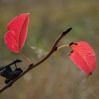 Осень красная :: Лидия Цапко