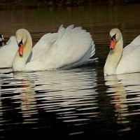 Три грации :: Alexander Andronik