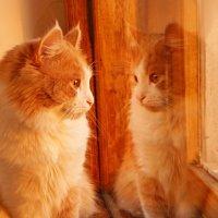 Рыжий кот :: Ольга Варсеева