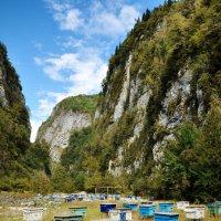 Эти пчёлы делают горный мёд :: Ирина Данилова